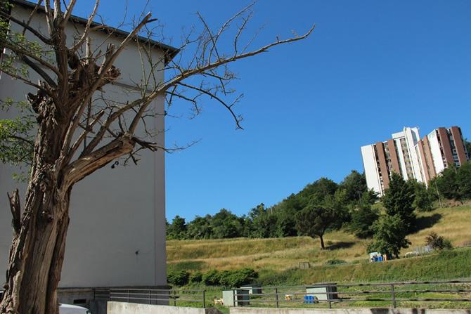 Site actuel du Bois-Monzil, Saint-Etienne © H. Jacquemin