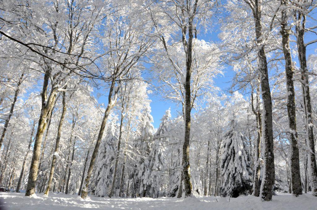 """Winter in """"Parc du Pilat"""" near Saint-Étienne. ©Saint-Étienne Tourisme"""