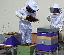 Les abeilles ventilent à Mines Saint-Étienne !